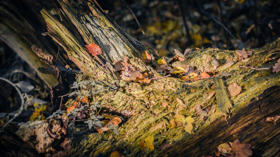 Herbst-Impression statt -Depression